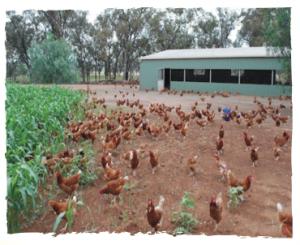 Inwood-organic-farm